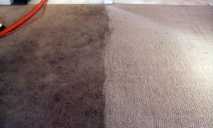 probestcarpetcleaning